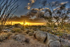 L'Arizona Desertscape Photo libre de droits