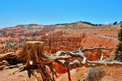 l'Arizona, Etats-Unis gorges Photo stock