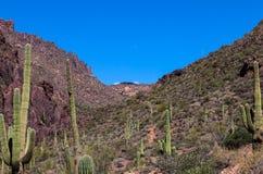 L'Arizona, région sauvage de montagne de superstition, traînée de Néerlandais, images stock