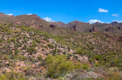 L'Arizona, région sauvage de montagne de superstition, traînée de Néerlandais, images libres de droits