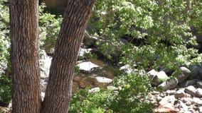 L'Arizona, roche de glissière, vue d'A de crique débordante de chêne par des arbres juste après la roche de glissière clips vidéos