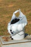 L'Arkansas Berry Crop Fotografie Stock Libere da Diritti