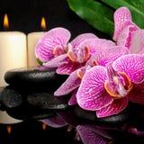 L'arrangement de station thermale de la brindille de floraison a dépouillé l'orchidée violette (phalaenopsi Photo stock