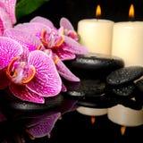 L'arrangement de station thermale de la brindille de floraison a dépouillé l'orchidée violette Image libre de droits