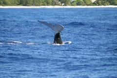 L'arrière de la baleine Photographie stock