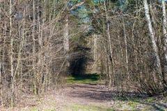 L'arrivo della molla nella foresta, germogli sugli alberi fiorisce, fioritura del fogliame fotografie stock libere da diritti