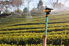 L'arroseuse de l'eau fonctionne dans le domaine de thé vert photo stock