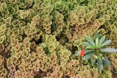 L'art de la botanique Photo stock