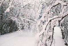 L'art de voir - une forêt nordique neigeuse photo stock