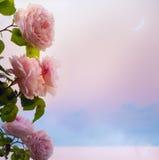 L'art fleurit la soirée romantique de roses sur le lac park Photographie stock