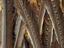 L'arte del modello delle piume Immagine Stock