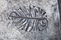L'arte e la foglia stampa sul pavimento del cemento nella manifestazione del giardino fotografia stock