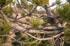 L'arto dell'albero Fotografia Stock Libera da Diritti