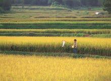 l'asia fotografia stock libera da diritti