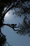 L'ASIA SUD-EST ASIATICO LAOS LUANG PRABANG Fotografie Stock Libere da Diritti