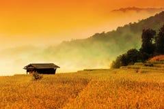 L'asiatico fa un passo giacimento del riso Fotografie Stock Libere da Diritti