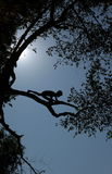 L'ASIE ASIE DU SUD-EST LAOS LUANG PRABANG Photos libres de droits
