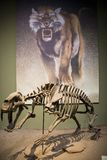 L'Asie Chine, musée de Tianjin d'histoire naturelle, squelette complet photographie stock libre de droits