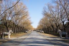 L'Asie Chine, Pékin, Ming Dynasty Tombs, découpage en pierre de Œhorse de ¼ de Roadï de Dieu Image libre de droits