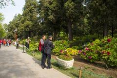 L'Asie Chine, Pékin, parc de colline de Jingshan, festival de ŒPeony de ¼ de landscapeï de jardin de ressort Photographie stock libre de droits
