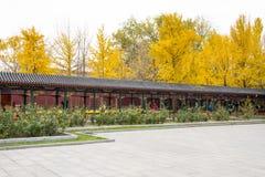 L'Asie Chine, Pékin, parc de Zhongshan, couloir, fleurs roses, arbre de ginkgo Image stock