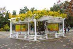 L'Asie Chine, Pékin, parc de Zhongshan, galerie blanche de pavillon Images libres de droits