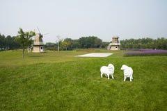 L'Asie, Chine, Pékin, shunyi fleurit le port, le moulin à vent, bonariensis pourpre de verveine, mouton de bande dessinée Photo libre de droits