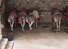 L'asino rulla a Mijas una di villaggi 'bianchi' più bei Fotografia Stock Libera da Diritti