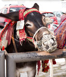 L'asino rulla a Mijas una di villaggi 'bianchi' più bei Immagini Stock