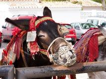 L'asino rulla a Mijas una di villaggi 'bianchi' più bei Immagini Stock Libere da Diritti
