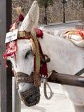 L'asino rulla a Mijas una di villaggi 'bianchi' più bei Immagine Stock Libera da Diritti