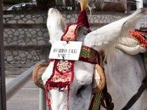 L'asino rulla a Mijas una di villaggi 'bianchi' più bei Fotografia Stock