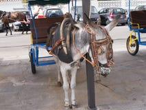 L'asino rulla a Mijas una di villaggi 'bianchi' più bei Fotografie Stock