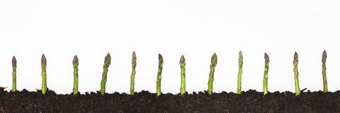 L'asparago germoglia su un fondo bianco immagine stock libera da diritti