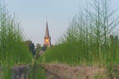 L'asparago verde sistema nell'ora legale, piccolo villaggio con la chiesa Fotografia Stock Libera da Diritti