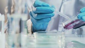 L'assistente di laboratorio verifica la medicina nella capsula di Petri, prova farmaceutica di controllo di qualità video d archivio