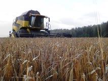 L'associazione falcia l'erba nel campo dell'estate Raccogliendo dopo la stagione estiva Dettagli e primo piano immagini stock