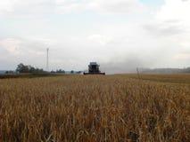 L'associazione falcia l'erba nel campo dell'estate Raccogliendo dopo la stagione estiva Dettagli e primo piano fotografia stock