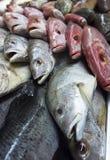 Assortimento dei pesci Fotografia Stock