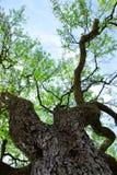 L'astrazione della cima d'albero lascia la prospettiva immagine stock libera da diritti
