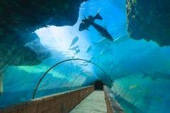l'Atlantide en Bahamas Image libre de droits