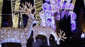 L'atmosphère de décor de nuit de nouvelle année de cerfs communs de Noël banque de vidéos