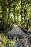 L'atmosphère enchantée dans la forêt Photo libre de droits