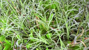L'atmosphère fraîche de matin avec l'herbe fraîche photo stock