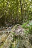 L'atmosphère magique dans la forêt Image libre de droits