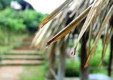 L'atmosphère sous la pluie, Photographie stock libre de droits