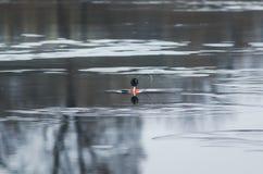 L'attirail d'imitation de poissons pour pêcher l'appât vivant a monté sur un trou dessus Photo libre de droits