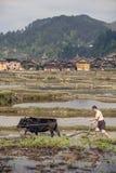 L'attrezzo cinese coltiva la terra usando la forza un toro, Guizhou Fotografie Stock