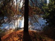 L'aube en nature de forêt d'automne belle est illuminée par lumière du soleil D?tails et plan rapproch? photos libres de droits