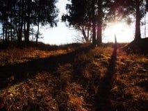 L'aube en nature de for?t d'automne belle est illumin?e par lumi?re du soleil D?tails et plan rapproch? images stock